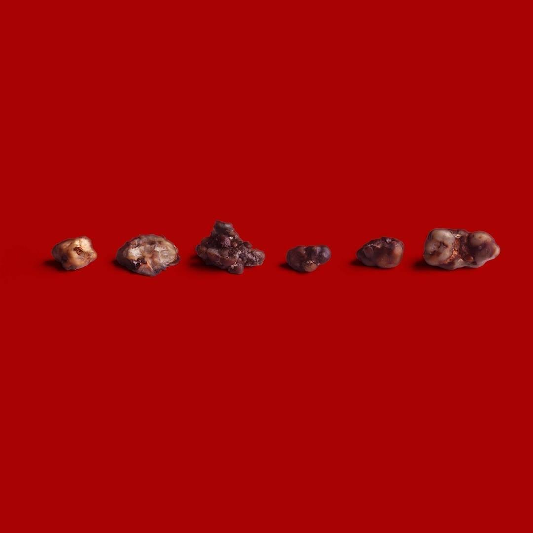 Red-Light-Holland-Mushrooms