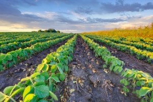 Potash vs. Phosphate: What's the Difference?