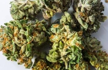 TSX Cannabis Stocks