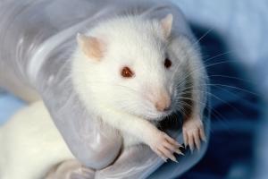 Researchers Working to Improve Longevity