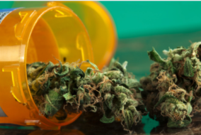 Medical Cannabis Market Expected to Grow Rapidly Over Next Four Years, Report Says