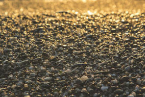Bezant Resources Now Producing Gold and Platinum