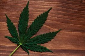 Cannabis Weekly Round-Up: NIH Funds Medical Marijuana Study