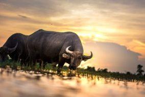3 Gold Experts Share Bullish Price Predictions