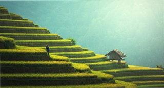 green-china