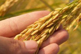 Agrium and PotashCorp Combine to Form Nutrien