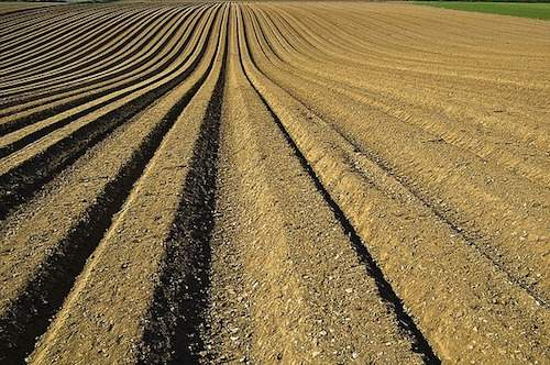 Potash Fertilizers: What's the Difference Between SOP and MOP?