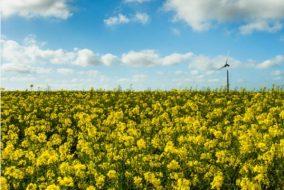 7 US Biofuel Stocks